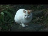 Момо, маленькая богиня смерти / Shinigami no Ballad . tv 2007 г.8 серия.часть 2...