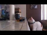 глупой кошки